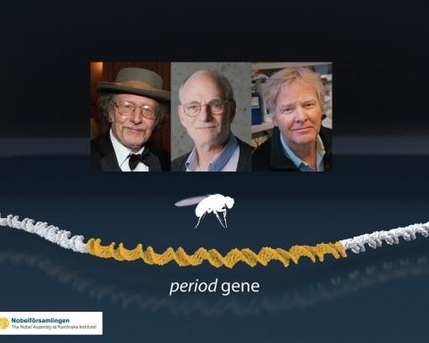 2017 Nobel Tıp Ödülü